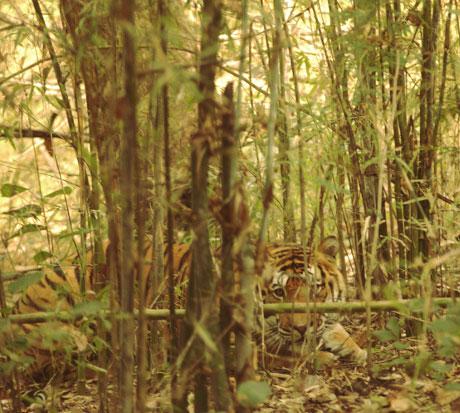 Леса занимают около